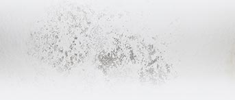comparateur de prix traitement mérule dans le Jura